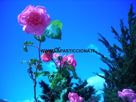Marmellata di petali di rose